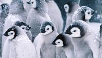 Продвижение сайта под пингвином или как бороться с фильтром?